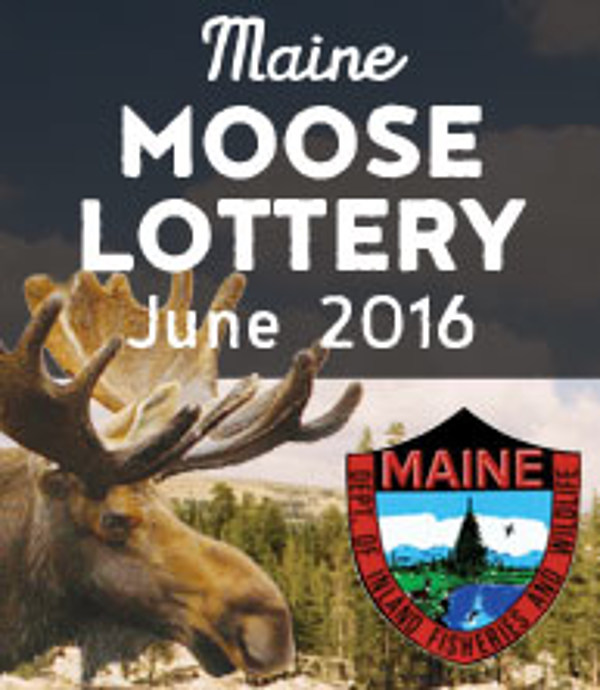 Here's the Aroostook County Winners in 2016 Moose Lottery