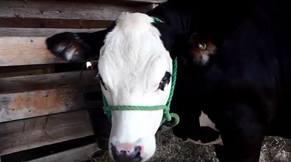 Gavin Shows 'Eugene' At The Northern Maine Fair [VIDEO]