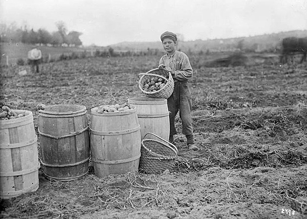 Maliseet (Wulustukwiak) boy on a farm with a basket of potatoes, Woodstock, New Brunswick